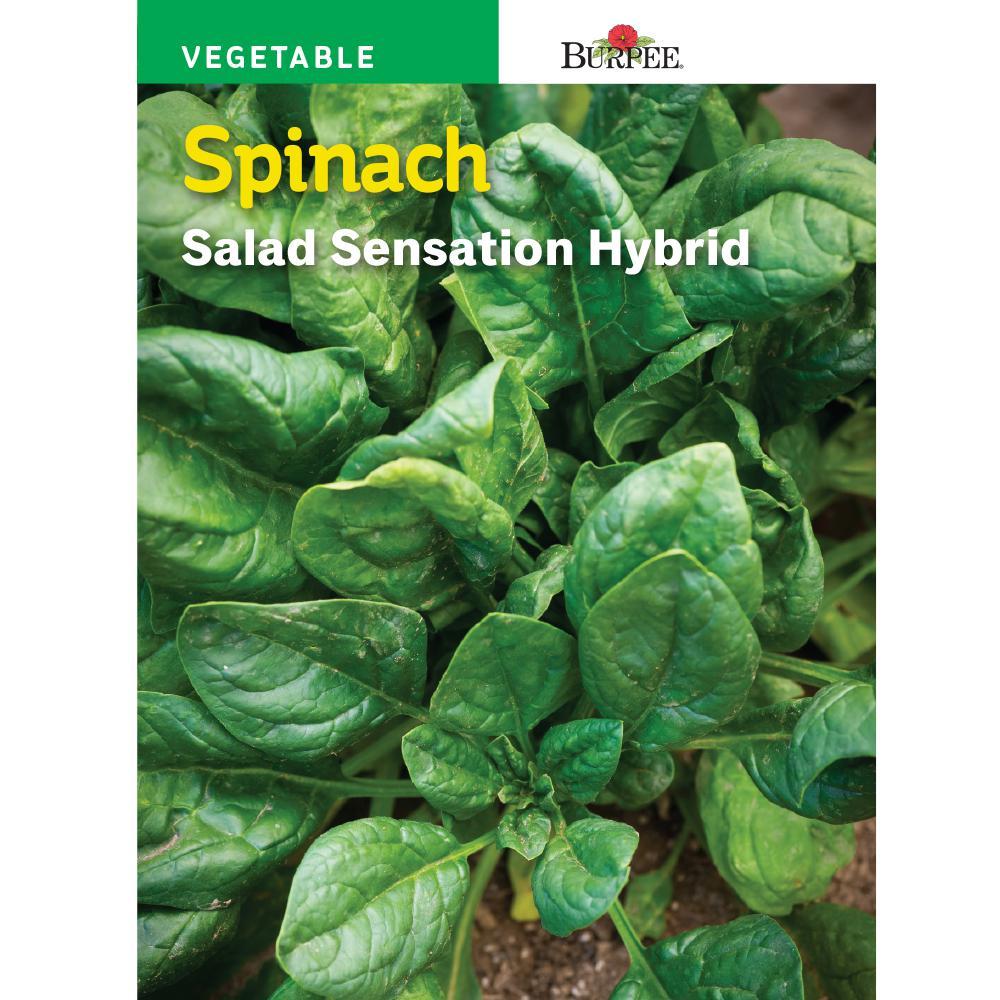 Spinach Salad Sensation Hybrid Seed