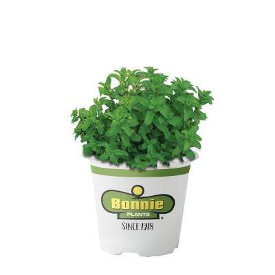 4.5 in. Lemon Balm