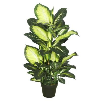 40 in. Dieffenbachia with Pot-Green White