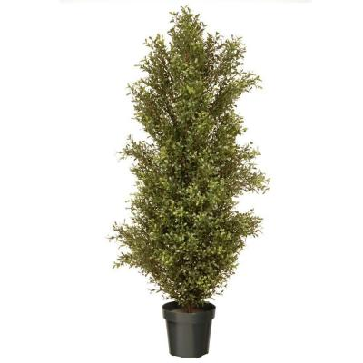 60 in. Argentea Plant with Round Green Growers Pot