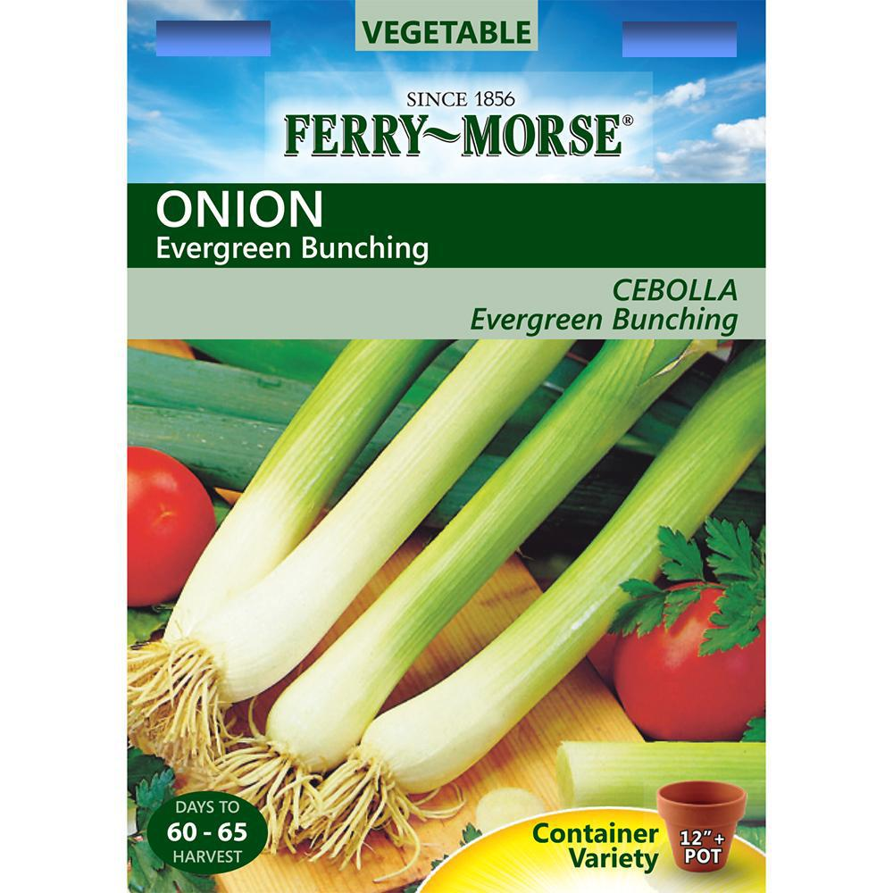 Ferry-Morse Evergreen Bunching Onion Seed