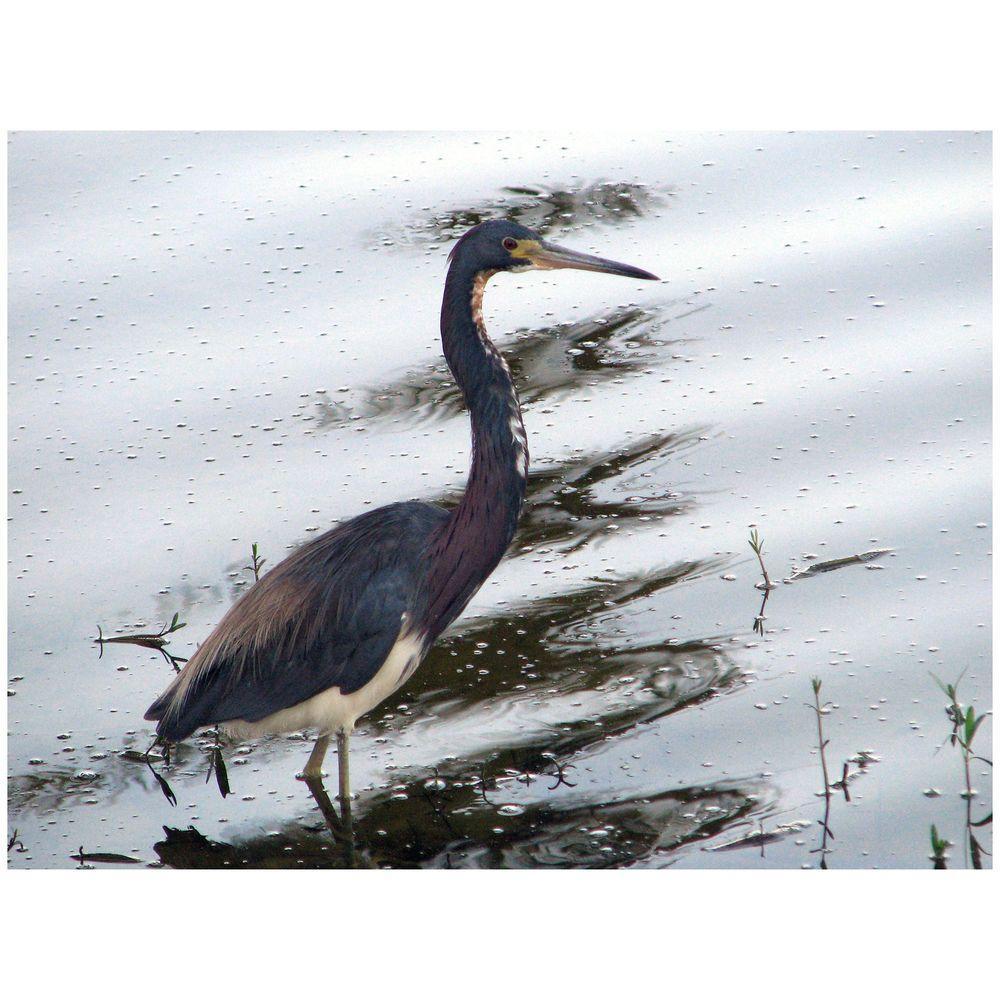 Trademark Fine Art 24 in. x 32 in. Heron Canvas Art-DISCONTINUED