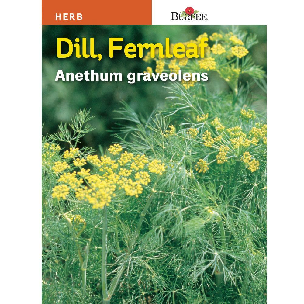 Dill Fernleaf Seed