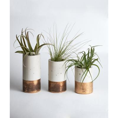 Bronze Concrete Cylinder Trio with Air Plants