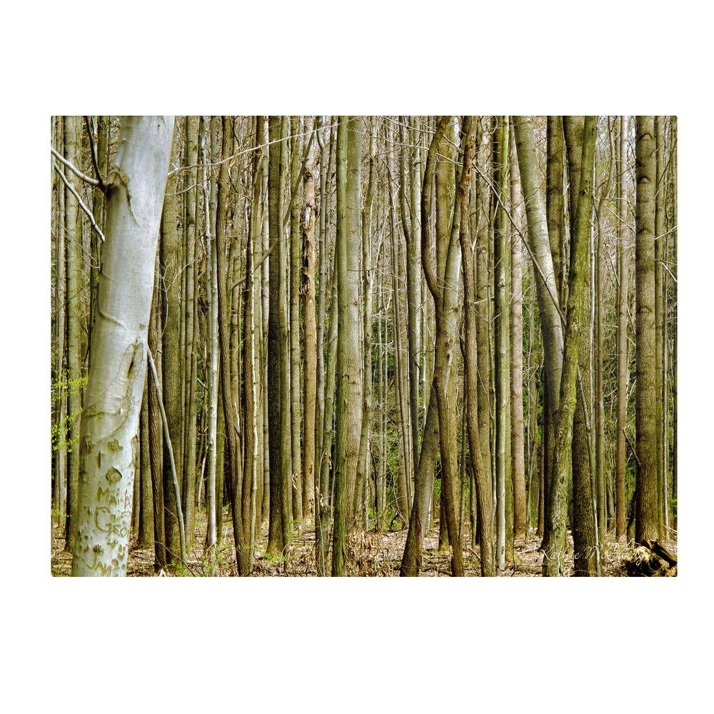 14 in. x 19 in. Forest Floor Spring Canvas Art