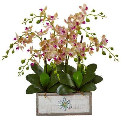 Indoor Phalaenopsis Orchid Arrangement in Decorative Wood Planter
