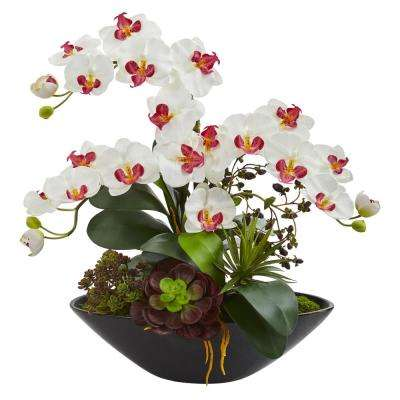Indoor Phalaenopsis Orchid and Mixed Succulent Garden Artificial Arrangement in Black Vase