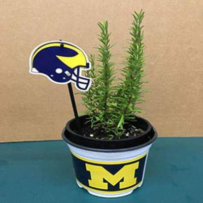Barbecue Rosemary Herb Plant and a University of Michigan Pot