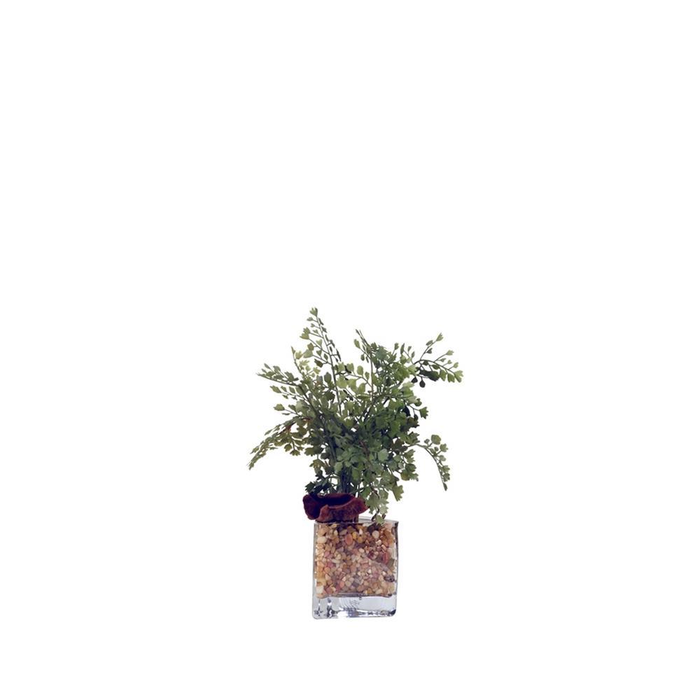 Indoor Maiden Hair Fern in Glass Vase
