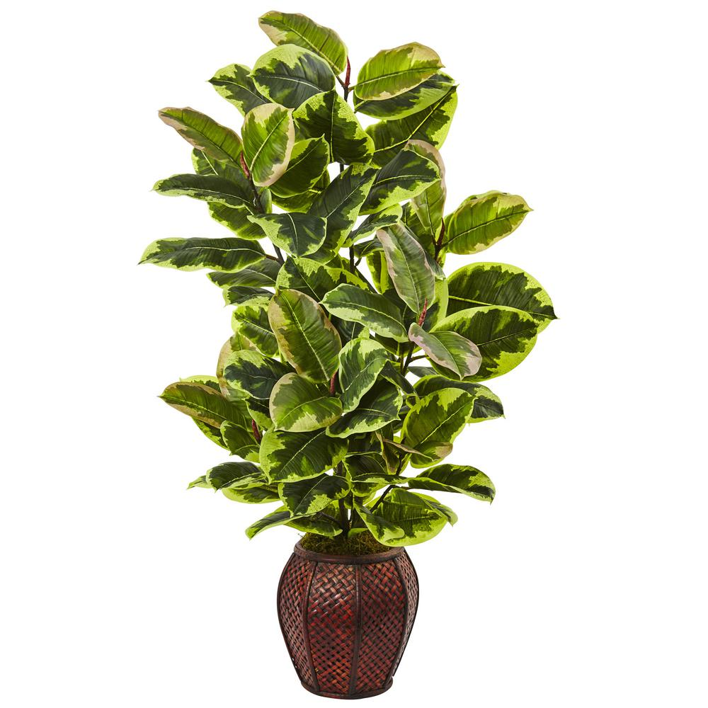 41 in. Rubber Plant with Planter