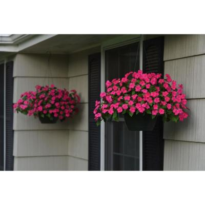 12 In. SunPatiens Pink Impatien Outdoor Annual Plant with Rose Flowers in 12 In. Hanging Basket