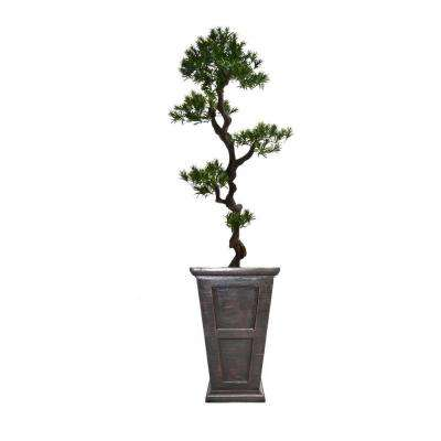 67 in. Tall Yacca Tree in Planter