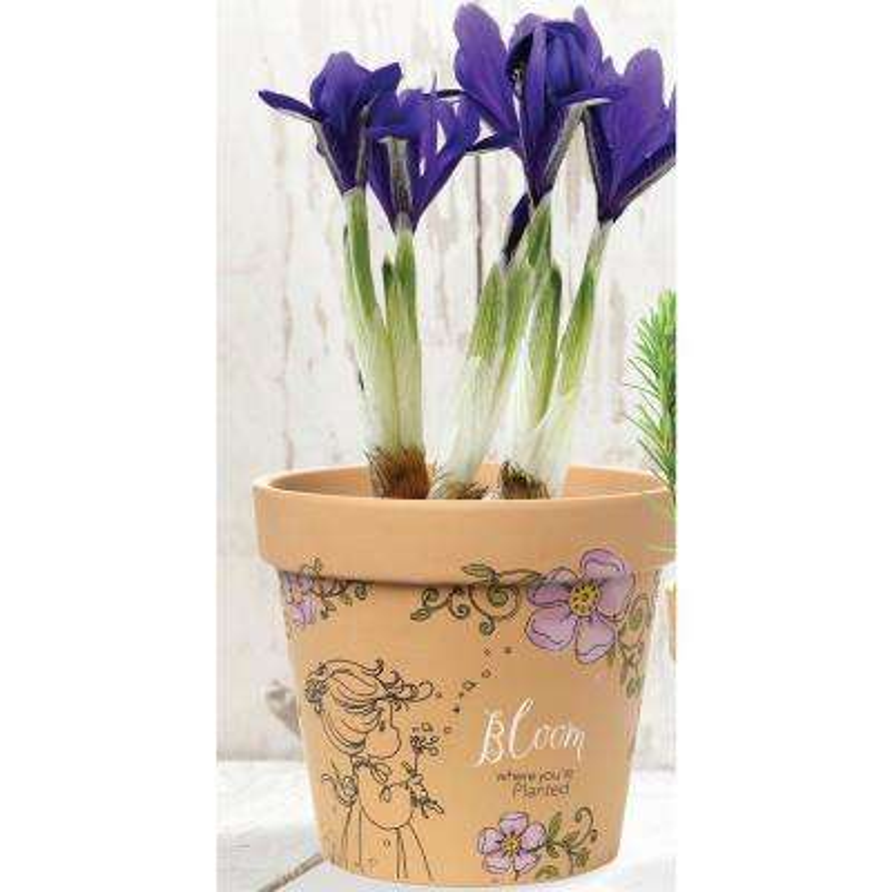 Bloom Where You're Planted 6 in. Dia Terra Cotta Medium Pot