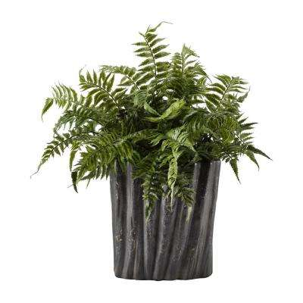 Indoor Large Leather Leaf Fern in Oval Ceramic