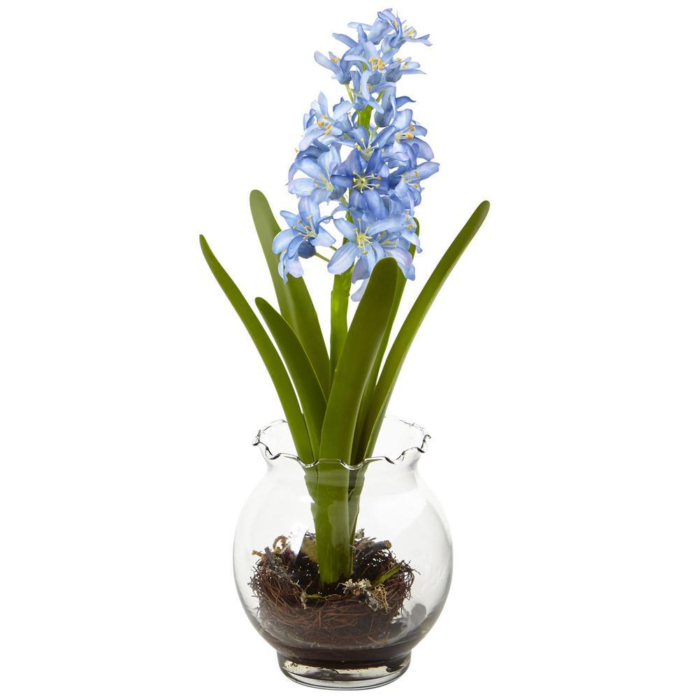 Hyacinth Birdsnest