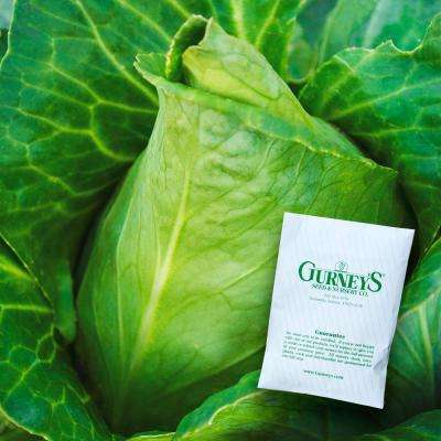 Cabbage Sweetheart Lettage Hybrid Seed (25-Pack)