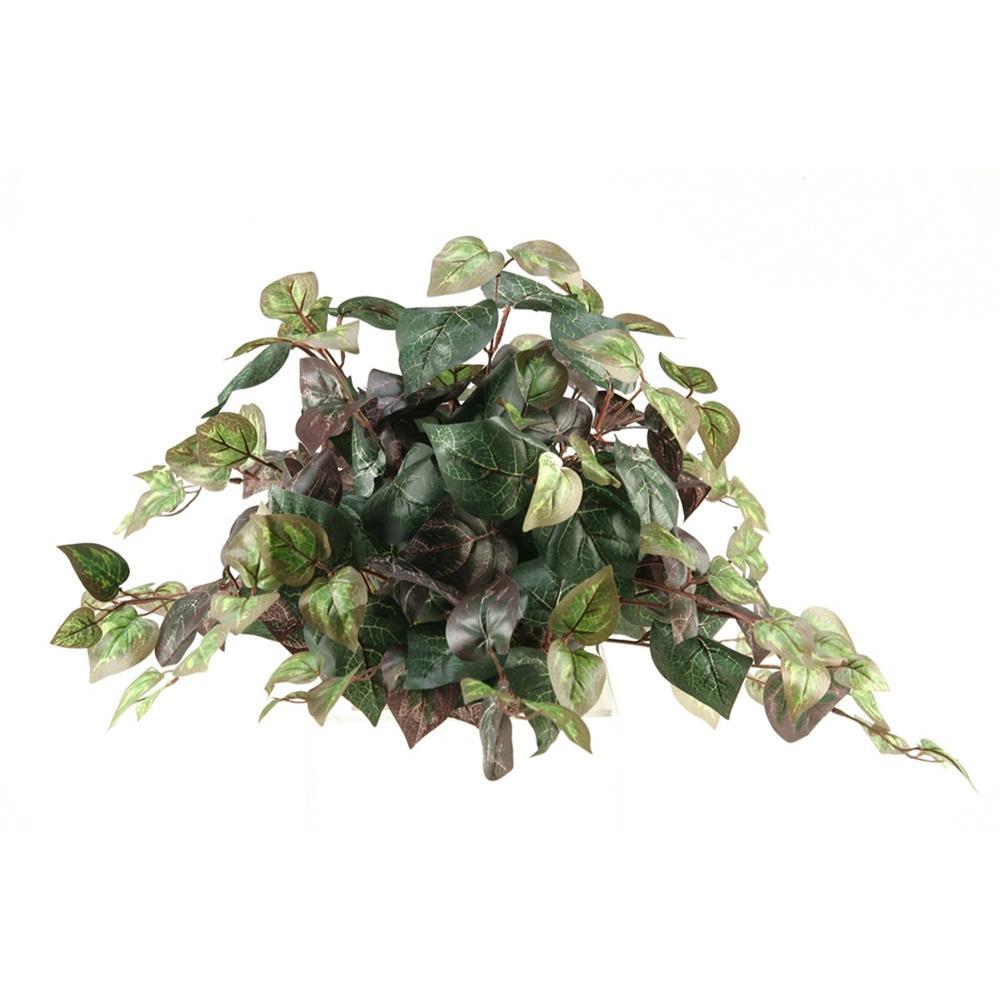 Indoor Oxalis Ivy Tile Topper