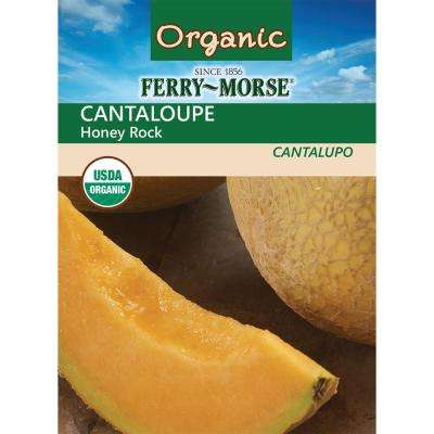 Cantaloupe Honey Rock Organic Seed