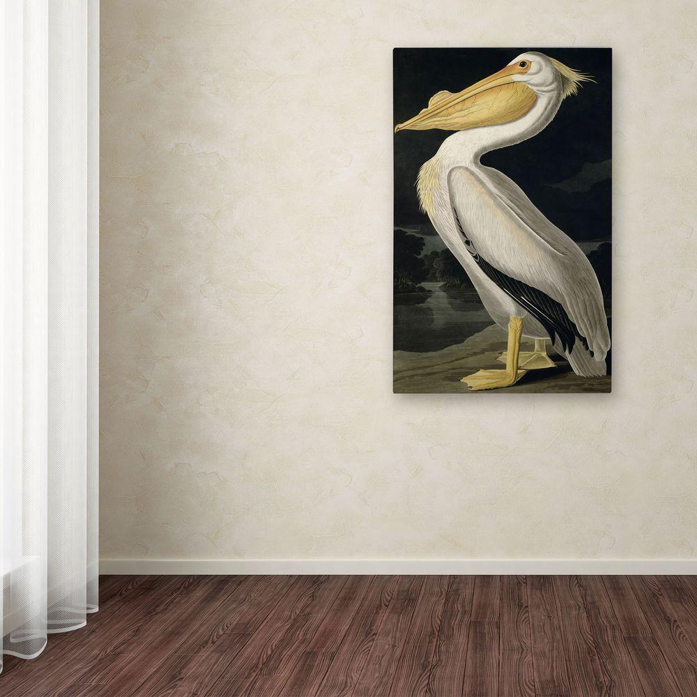 24 in. x 16 in. American White Pelican Canvas Art