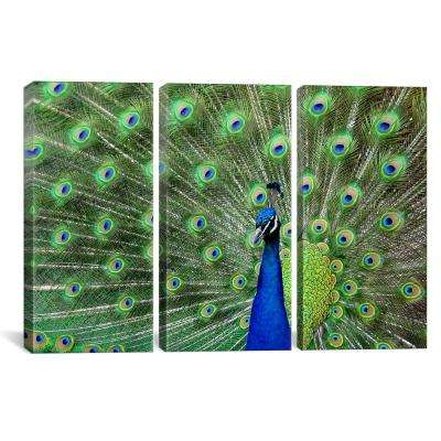 """""""Peacock Feathers"""" by Unknown Artist Canvas Wall Art"""
