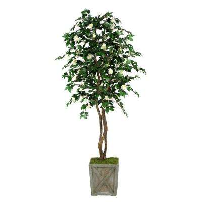 Indoor 7 ft. White Camillia Tree in Wooden Box Planter