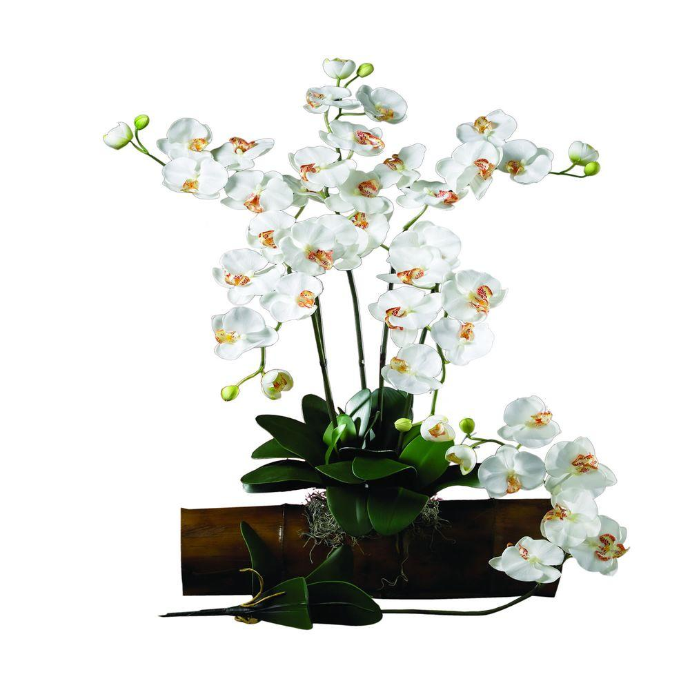 31.5 in. H Cream Phalaenopsis Stem (Set of 12)