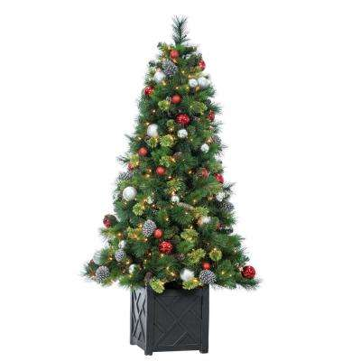 The Gerson Companies 3.5 Outdoor Potted Cedar Pine Clear Light Tree Set of 2