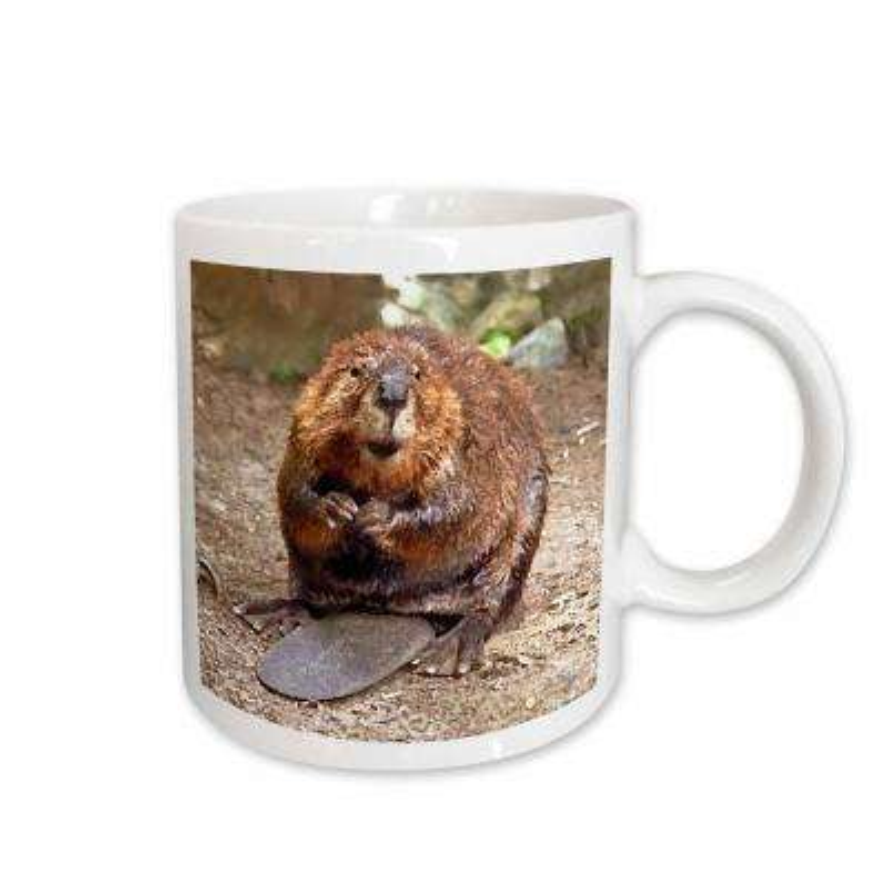 Wild Animals 11 oz. White Ceramic Beaver Mug