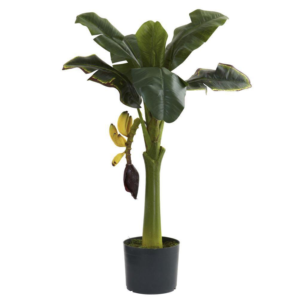 3 ft. Banana Tree