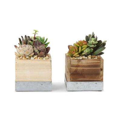 4 in. Succulent in Wood Box Combo 4 in. (2-Plants)