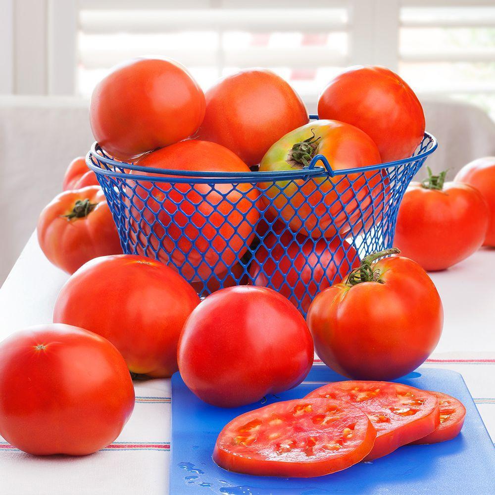 Bonnie Plants 4.5 in. Celebrity Tomato