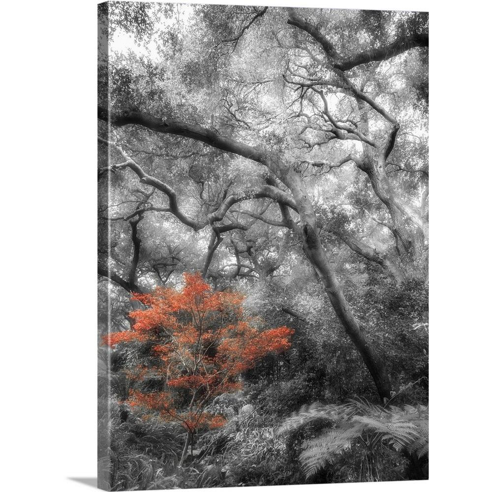 Greatbigcanvas black and white trees with color by dianne poinski canvas wall art 2197778 24 18x24 the home depot