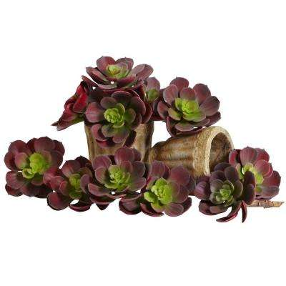 5 in. Echeveria Succulent Plant (Set of 12)