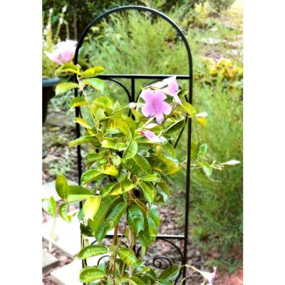 48 in. Metal Pot Trellis
