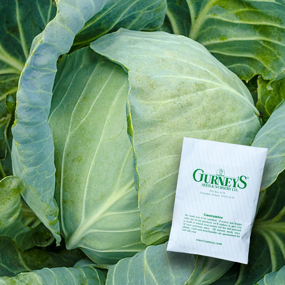 Cabbage Stonehead Hybrid Seed (100-Pack)