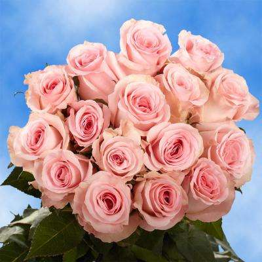 Fresh Pink Valentine's Day Roses (100 Stems)
