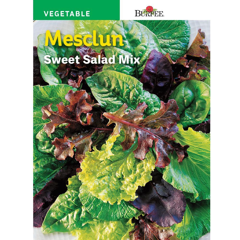 Mesclun Sweet Salad Mix Seed