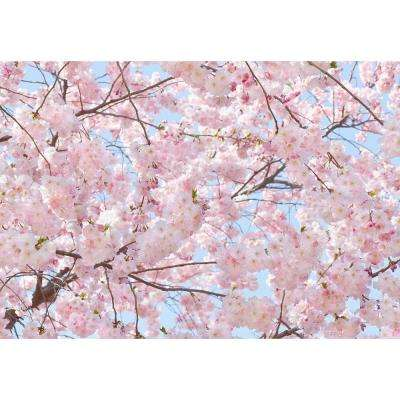 144 in. H x 100 in. W Pink Blossoms Wall Mural