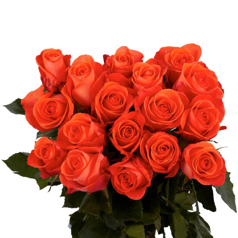 Globalrose Fresh Coral Color Roses (100 Stems)