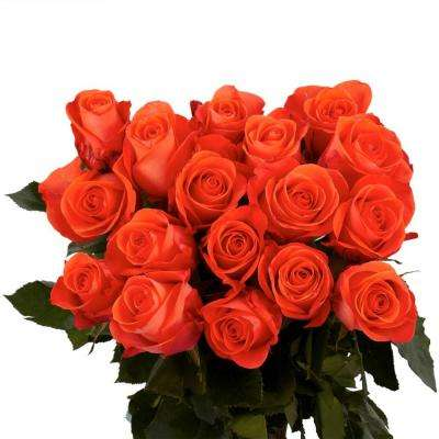 Fresh Coral Color Roses (100 Stems)