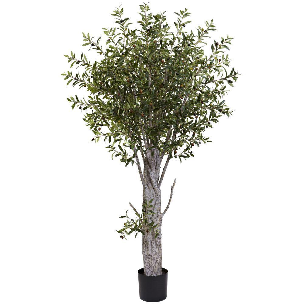 6 ft. Olive Tree
