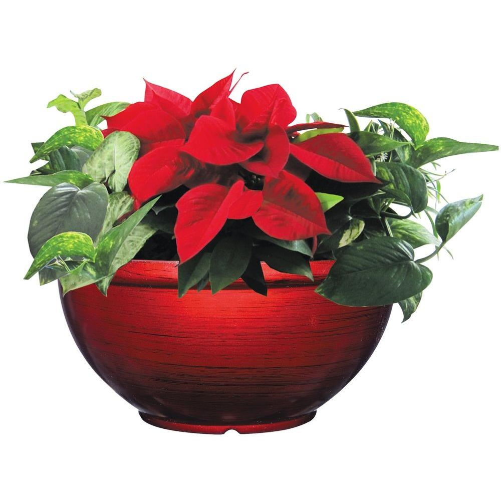 Unbranded 12 In Bellina Bowl Poinsettia In Store Only 10032 The Home Depot