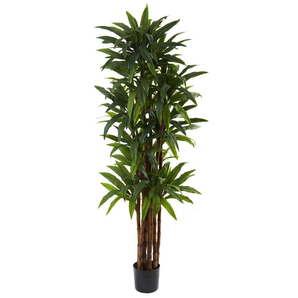 6.5 ft. Dracaena Tree