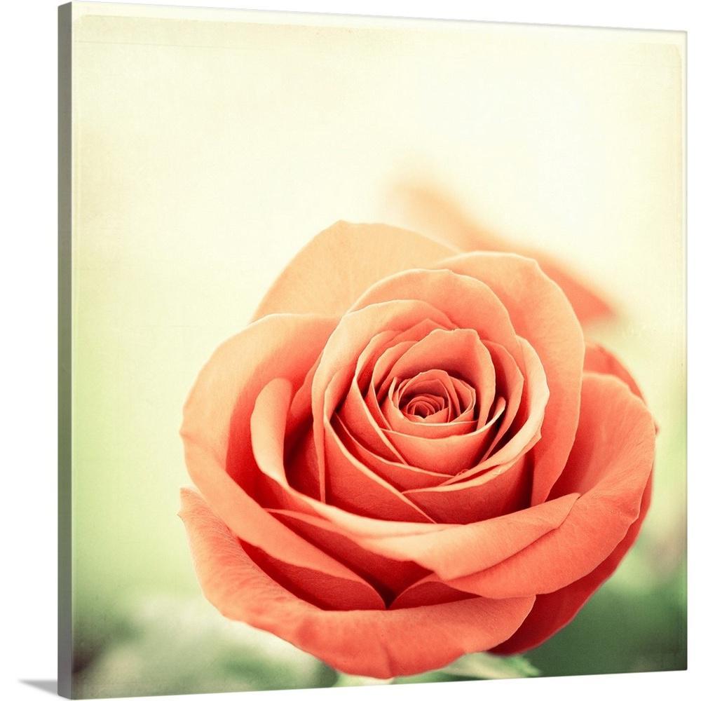 """""""My Perfect Rose"""" by Carolyn Cochrane Canvas Wall Art"""