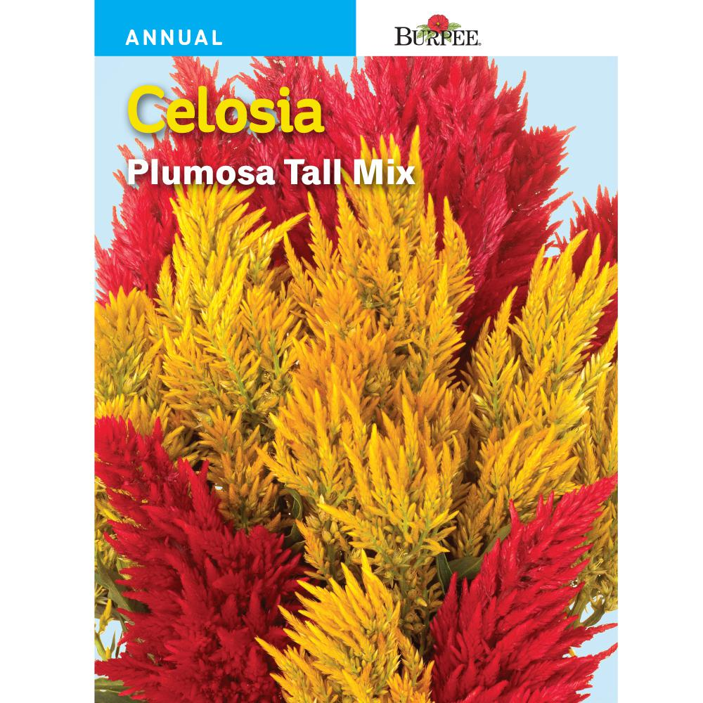 Burpee Celosia Plumosa Tall Mix Seed 40615 The Home Depot