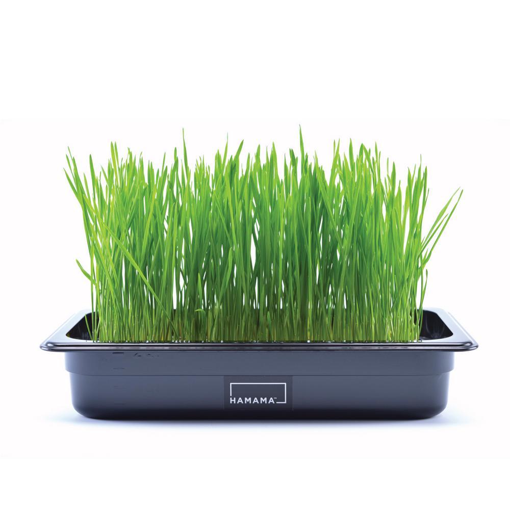 Cat Grass Kit with 3-Wheatgrass