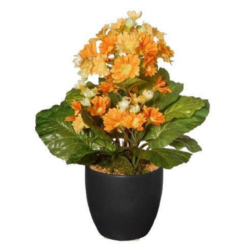 12 in. Potted Primula Plant