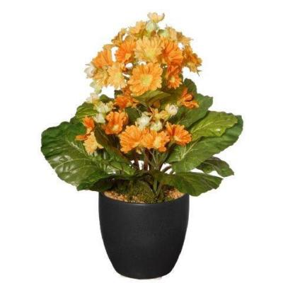 12 in. Potted Primula Plant