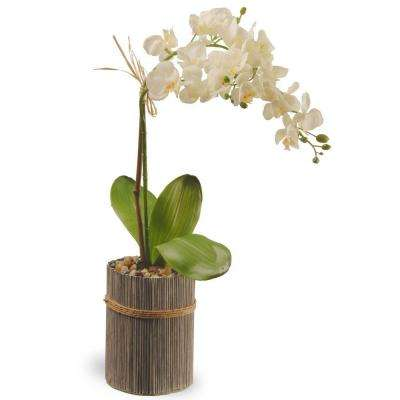 20 in. Garden Accents Potted Orchid