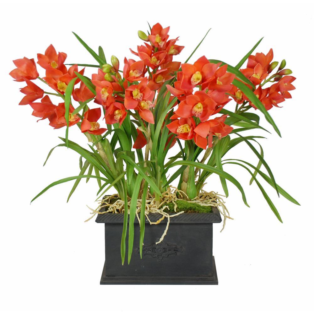 31 in cymbidium orchid plants in rectangular planter orange
